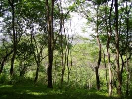 Reserva forestal, a través brilla el sol