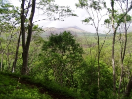 Forest reserve and a view of the volcano