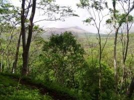 Reserva forestal y una vista al volcán